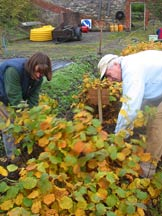 Lifting seedlings