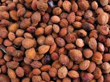 Blackthorn seeds