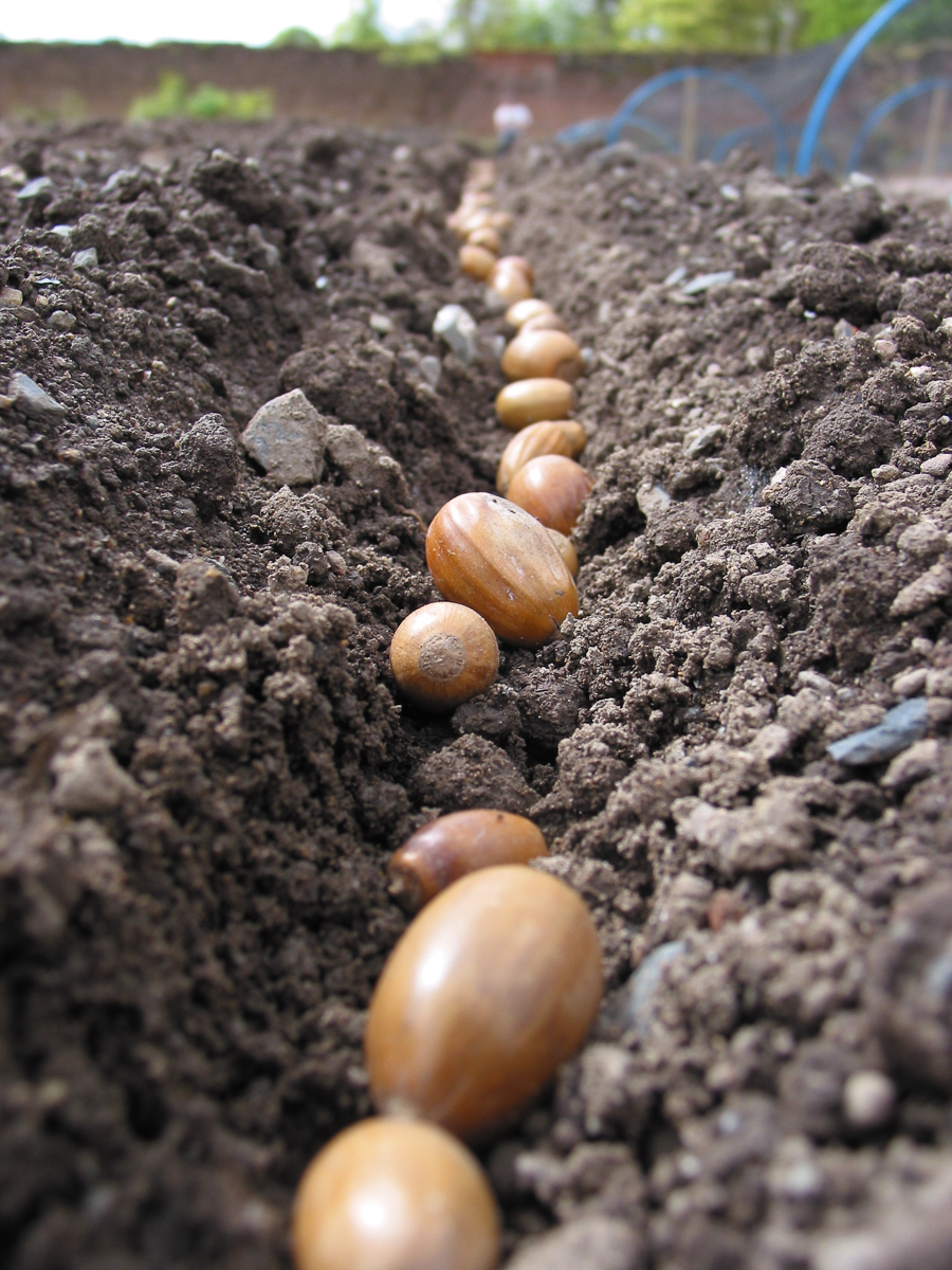 Sowing Your Tree Seeds How To Grow Trees