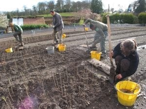 People transplanting young trees in a nursery