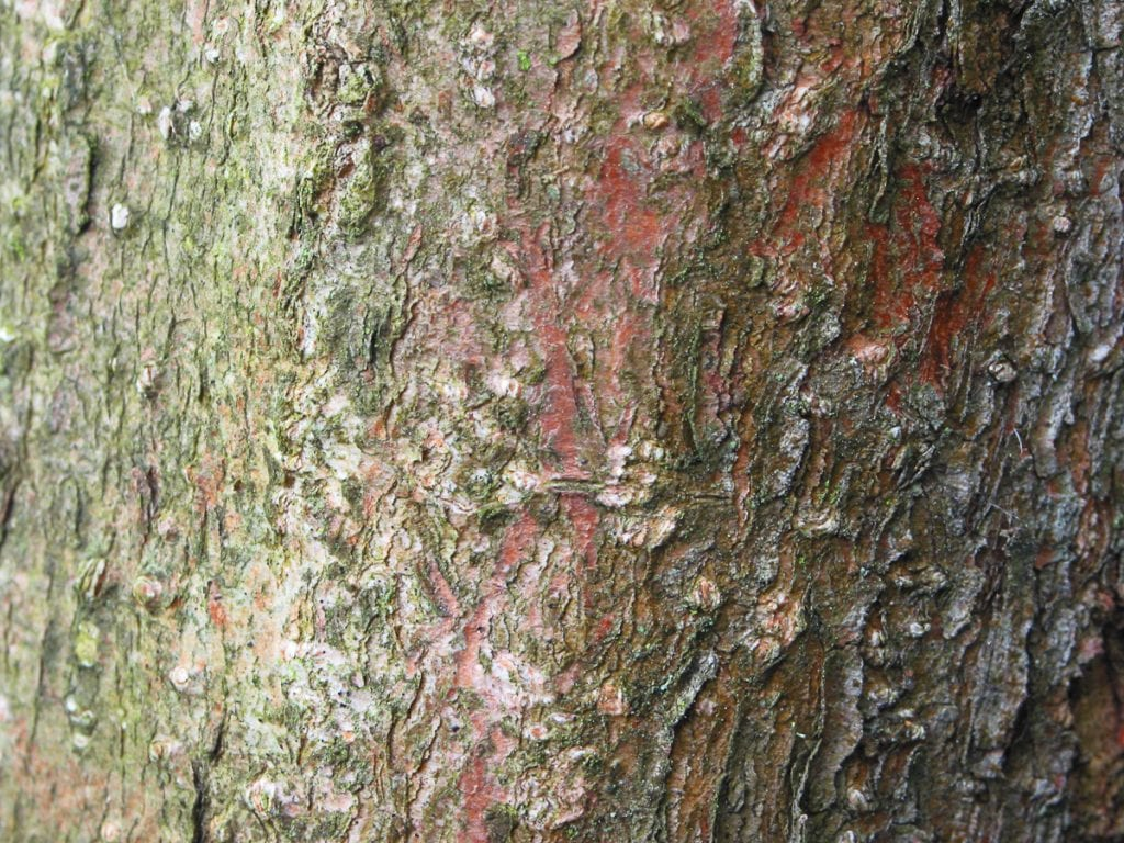 Guelder rose bark