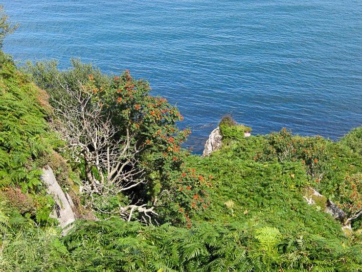 Rowan on the coast in North Antrim